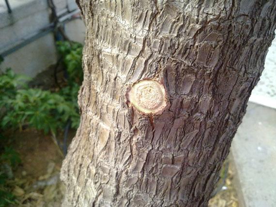 Nokia N97 photo sample 3