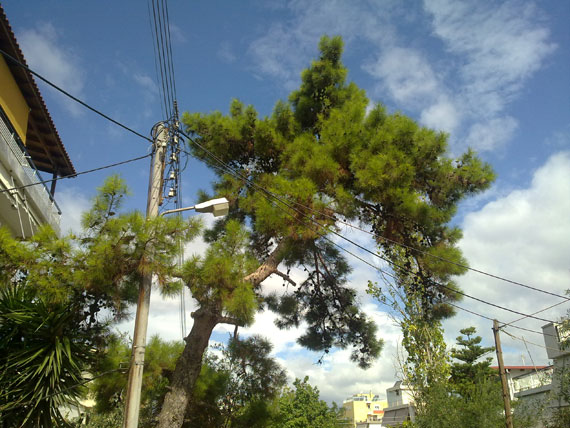 Nokia N97 photo sample