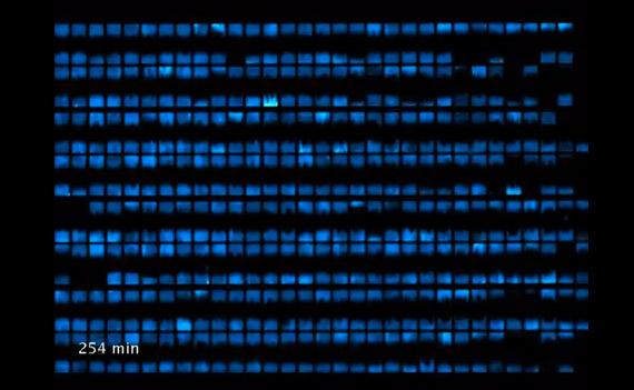 Biopixels, Οθόνη από βακτήρια που τρέφονται με φοσφορίζουσα πρωτεΐνη