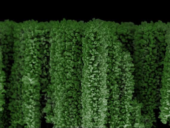 Δέντρα με νανοτεχνολογία, ικανά να παράγουν ενέργεια