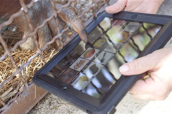 Ape Apps, Οι ουραγκοτάγκοι μιλούν με τους ανθρώπους με ένα iPad