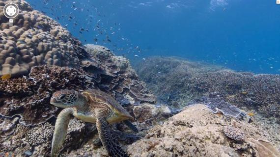 Google Street View Underwater, Βουτήξτε στα νερά του Μεγάλου Κοραλλιογενούς Υφάλου