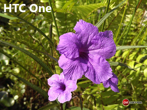 HTC One flower