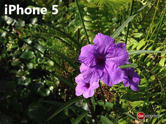 iPhone 5 flower