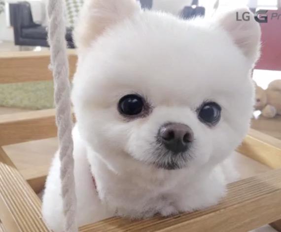 LG G Pro 2 Cute Boo
