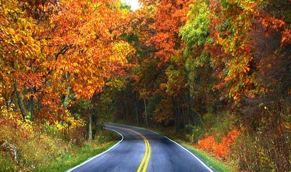 Scenic-Road-yahoo-570