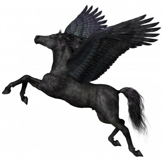 Pegasus-asus-570