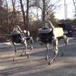google robot spot