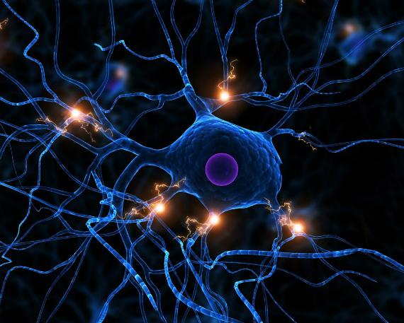 neuron robot