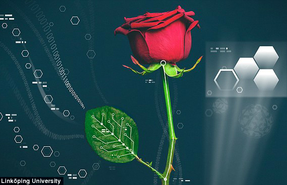 bionic-roses-01-570