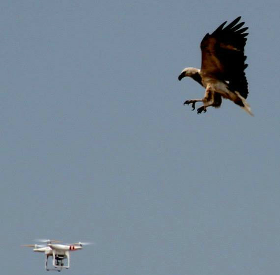 eagles-drones-570
