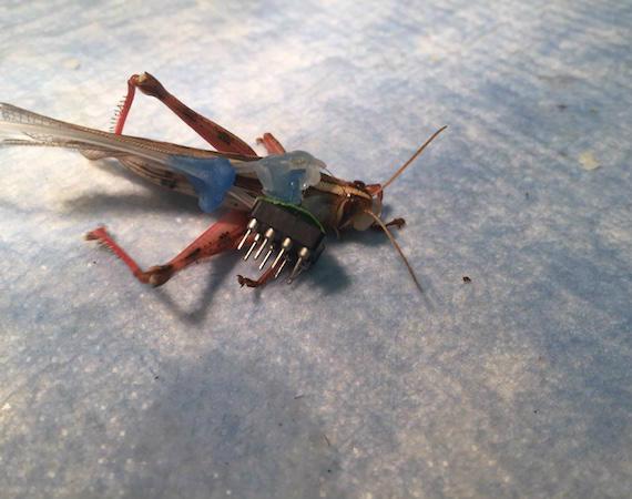 cyber locust