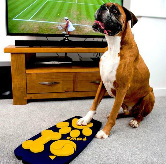 tv remote dogs