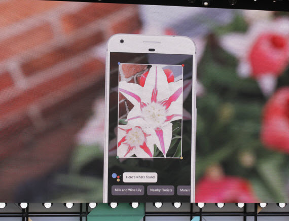 google lens flower example