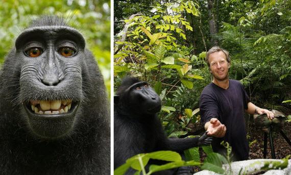 monkey selfie slater