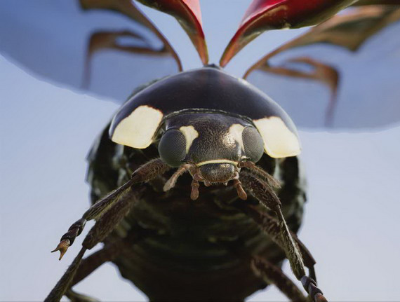 Xbox-One-X-insects
