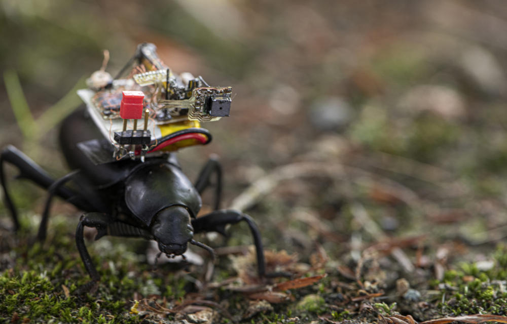a GoPro for beetles