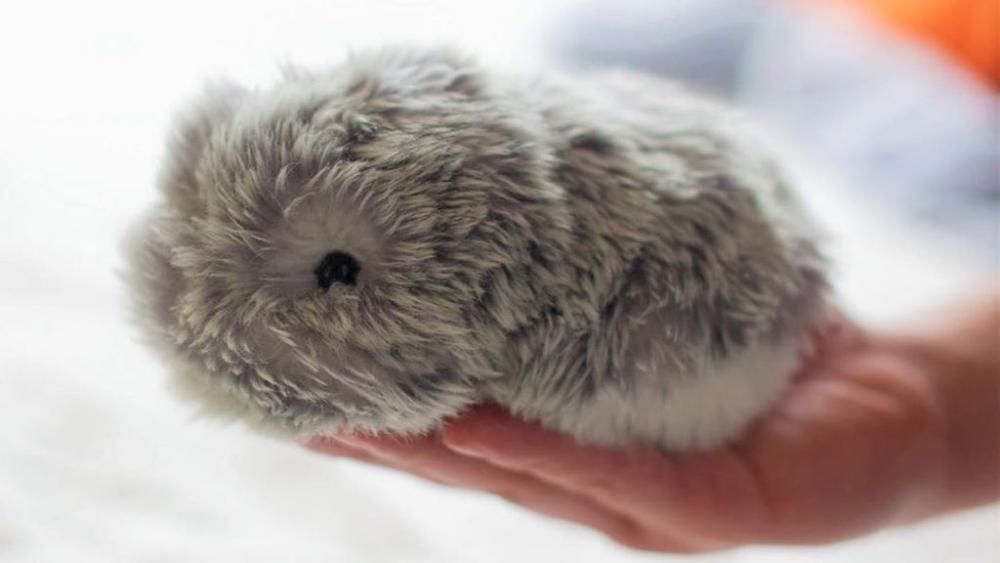 MOFLIN AI Pet CES 2021