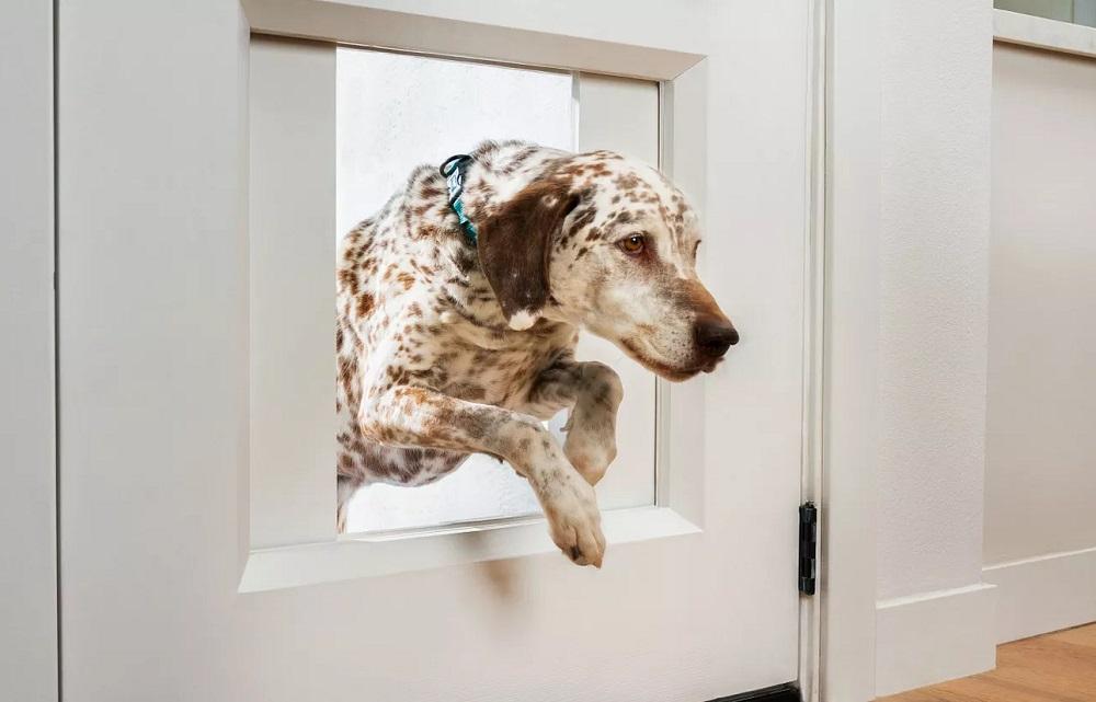 MyQ Pet Portal: High-tech πόρτα για το σκύλο σας με μόλις… $3.000! [CES 2021]
